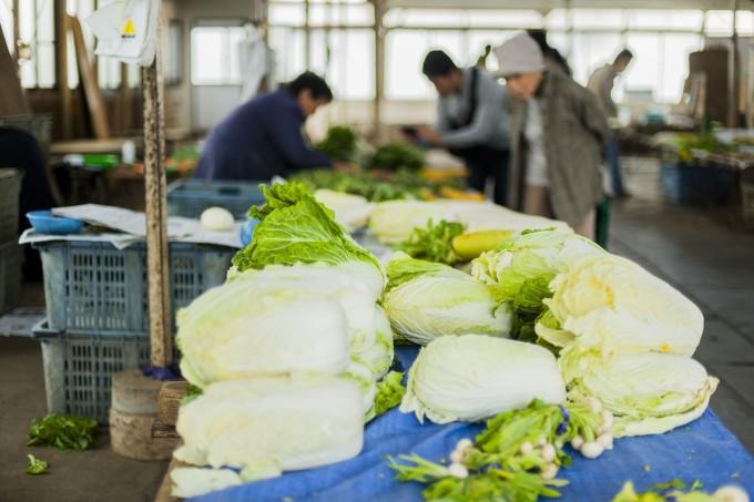 鎌倉農協連卸売所の鎌倉野菜キャベツの写真