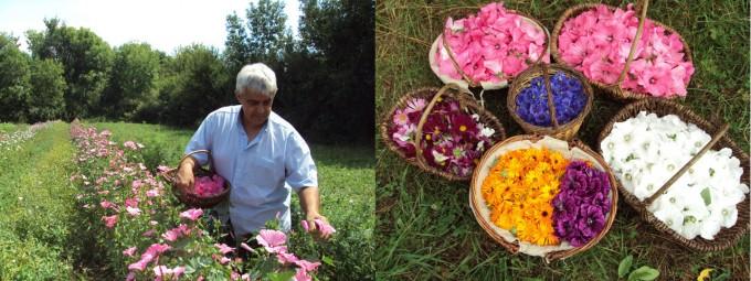 「CHOC'FLEURS」。小さな農家のご夫婦がつくる100%無農薬・無化学肥料栽培のチョコ。
