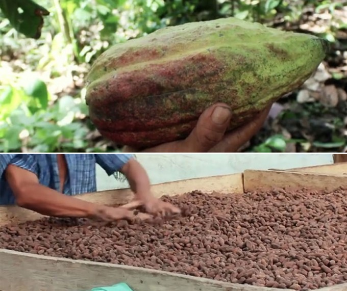 Chocolate Naive(チョコレートナイーブ)リトアニアbeantobar(ビーントゥバー)チョコレート