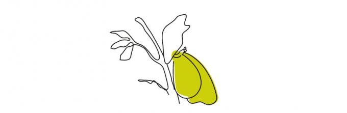 さなぎから蝶へと羽化するイラスト