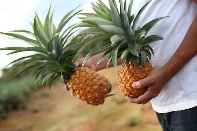 沖縄のパイナップルを持っている写真
