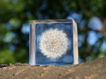 キューブに閉じ込めた自然の造形美。ウサギノネドコの「Sola cube(ソラキューブ)」
