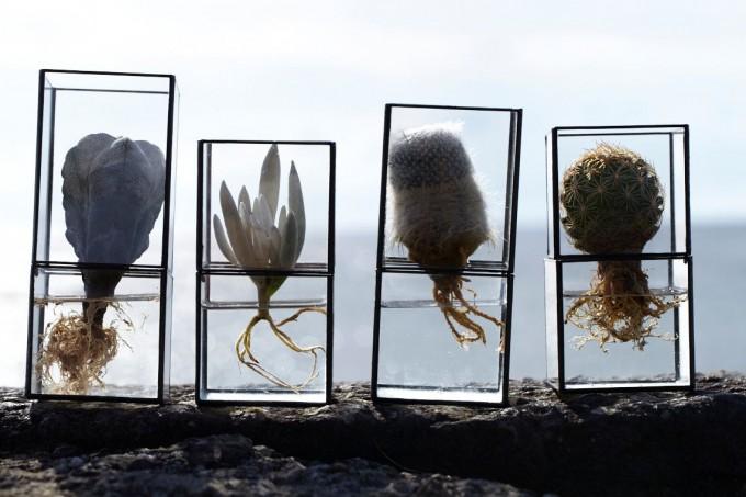 4つの10¹² TERRA(テラ)のガラス製の水栽培用テラリウムに入った植物