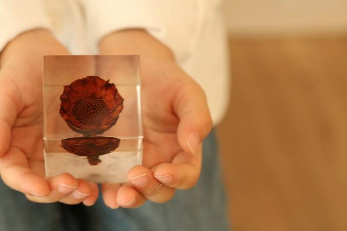 手のひらに乗せた「sola cube」の植物標本