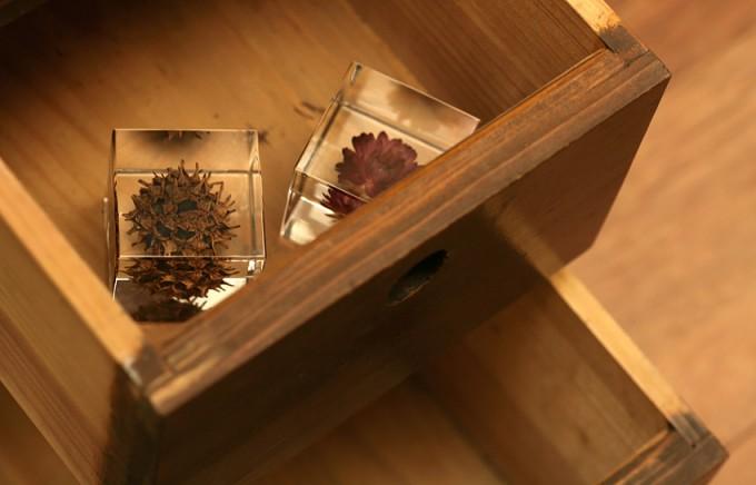 木の引き出しの中に入った「sola cube」の植物標本
