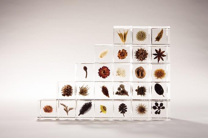 アクリルキューブに閉じ込めた様々な植物標本