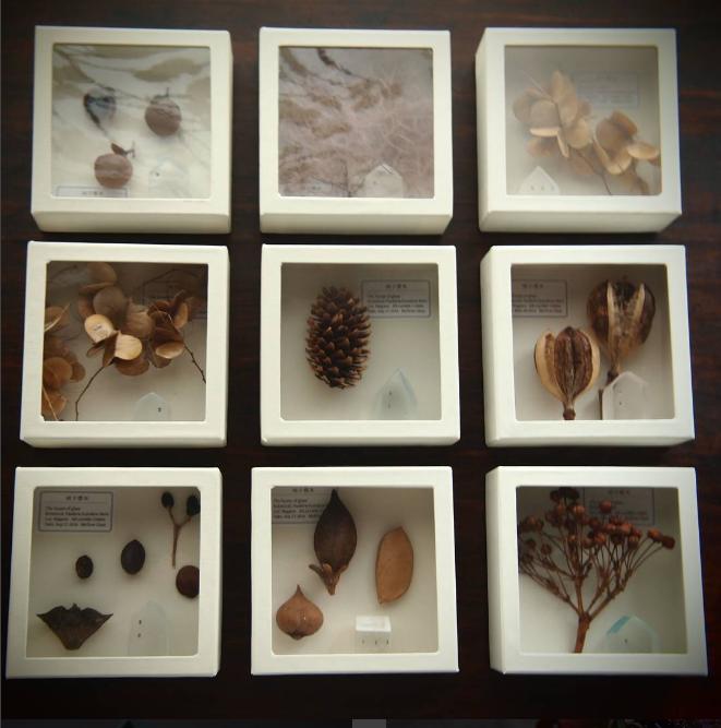 「Mellow Glass(メロウグラス)」の硝子標本の写真