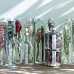 ハーバリウムが大人気。清澄白河にある、お花と植物の...