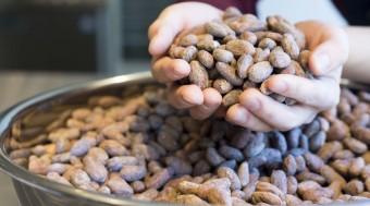 カカオの違いで広がる「CRAFT CHOCOLATE WORKS」の新たなチョコレートの世界