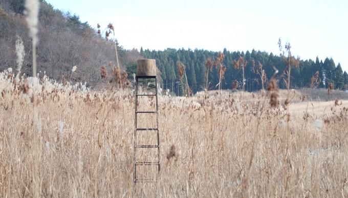草むらの中にある枯白 kokuのはしご