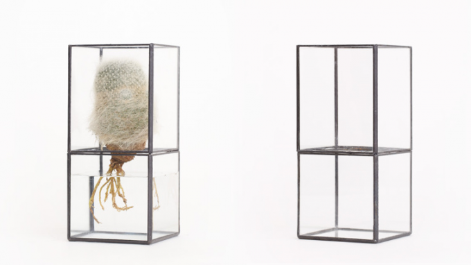 10¹² TERRA(テラ)のガラス製の無色透明の水栽培用テラリウム