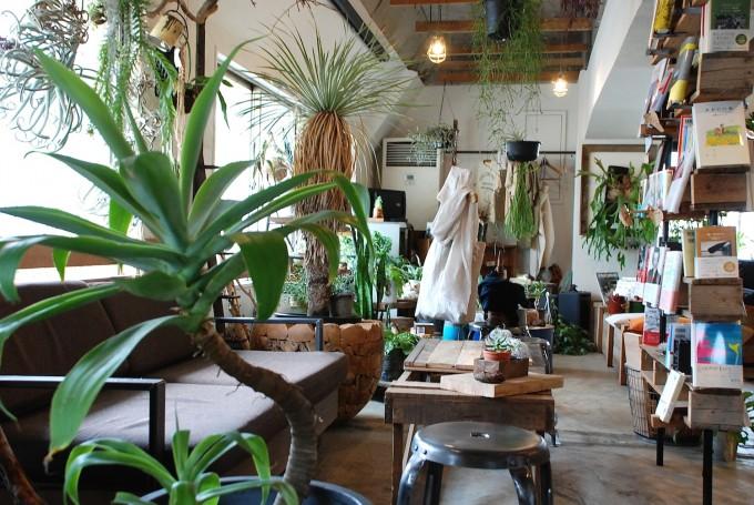 アガペーと茶色のソファとアンティーク風のテーブルと白い服と本の写真