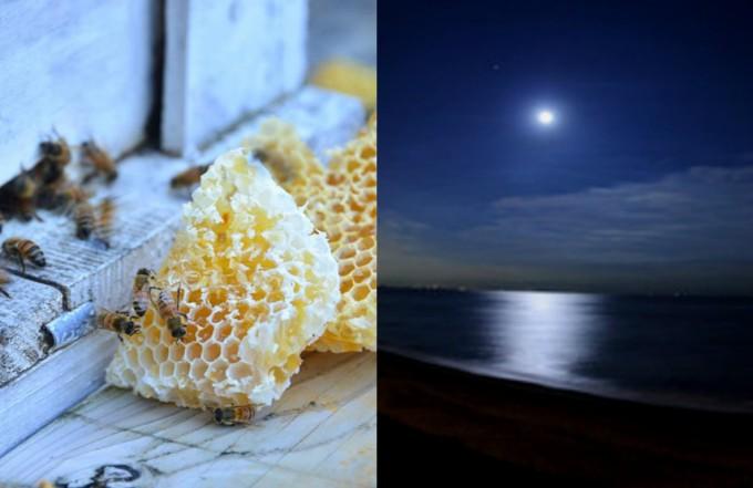 2830のイメージ、月の満ち欠けとミツバチ