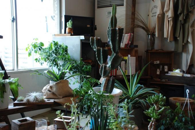 サボテンや多肉植物と本棚に本が並んでいる写真