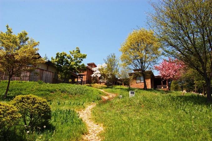緑の原っぱと木造建築とピンクの花の咲いた木の写真