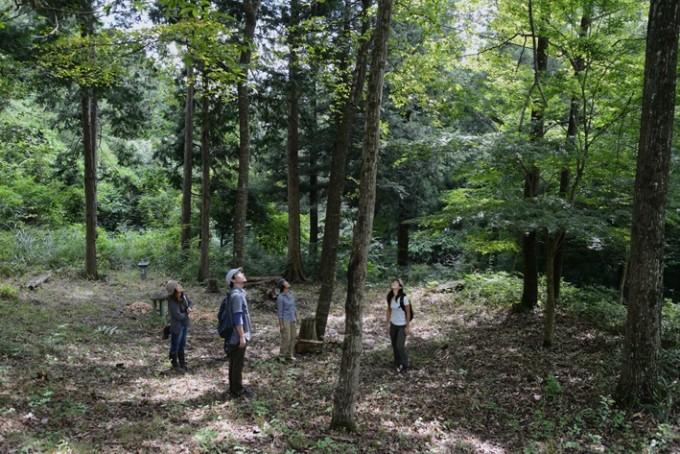 森の中で上を見上げている男女4人