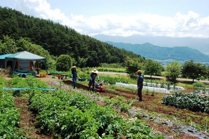 畑で農作業をしている若者たち
