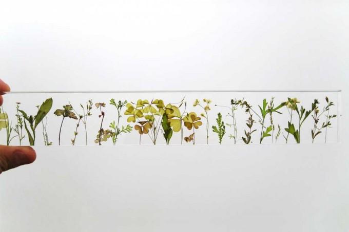 studio noteの野草や花々を閉じ込めたアクリル定規