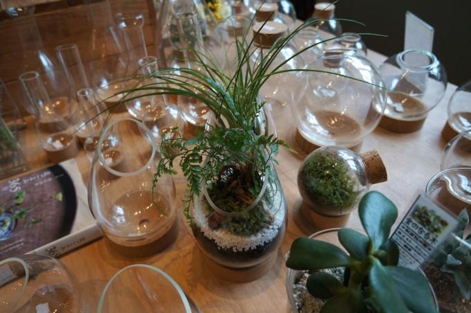 ガラス瓶と植物で作るテラリウムが並んだ清澄白河「リカシツ」の木の机の写真