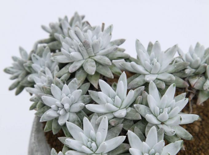 叢 - Qusamura(くさむら)の器に入った植物