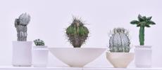 """グリーンでお部屋を華やかに。「叢 – Qusamura」が選ぶ""""いい顔""""してる植物"""