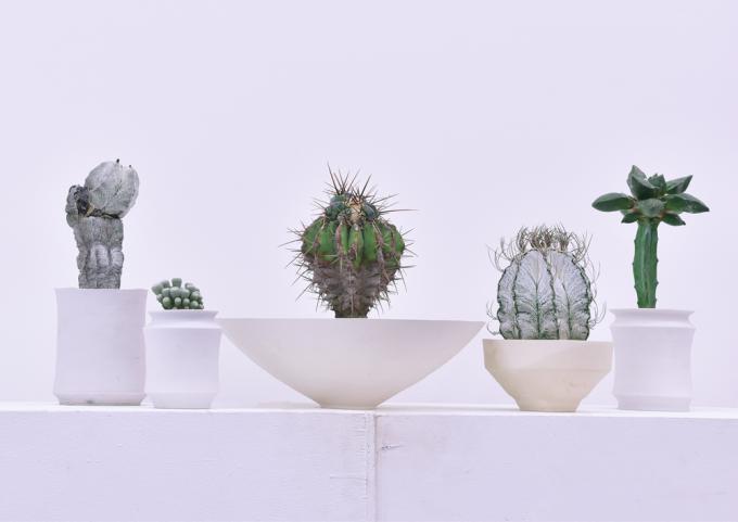 叢 - Qusamura(くさむら)の器に入った植物5種類