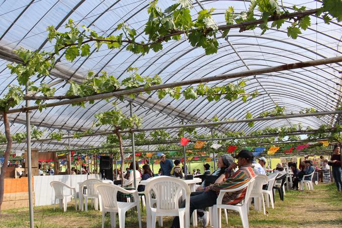 ぶどう園のフェス