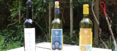 ファミリー3代が富山ならではのワインを造る、北陸で最も古い「やまふじぶどう園&ホーライサンワイナリー」
