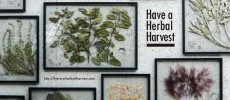 Have a Herbal Harvestロゴと、「frame」