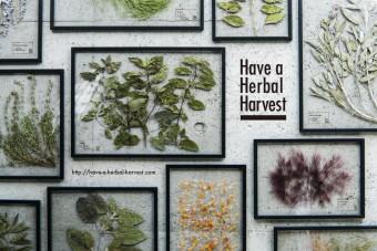 大切な人への贈り物に。飾れるハーブティー「Have a Herbal Harvest」