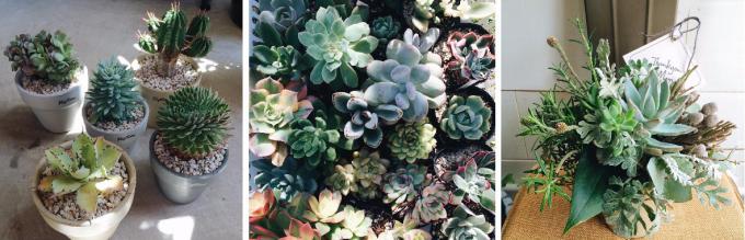 「Naptime 小林植物店」の多肉植物、寄せ植え、アレンジメント