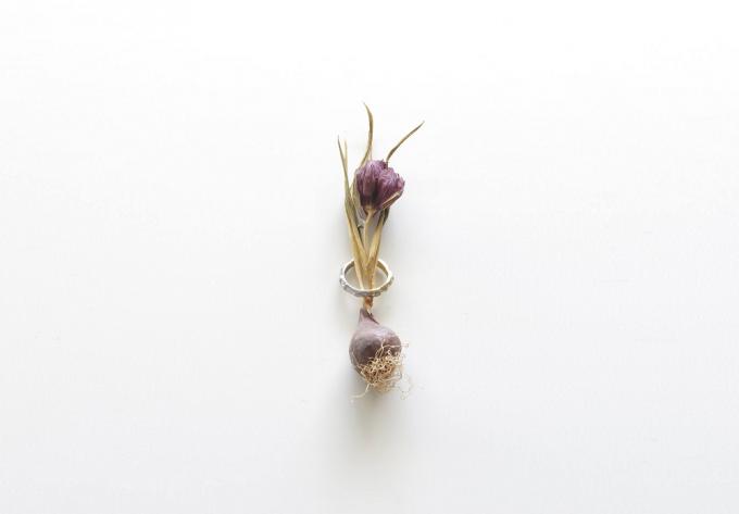 植物に通したKANOE(カノエ)のリング