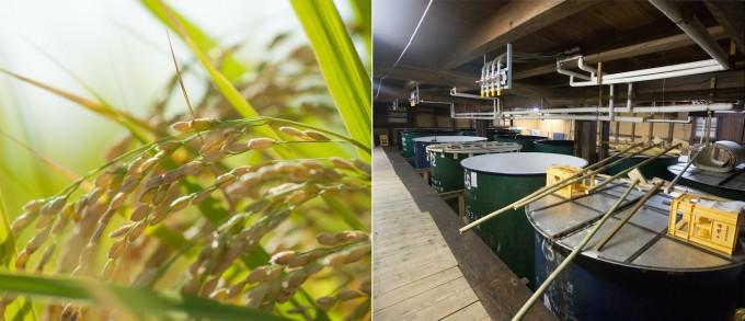稲穂とお米と酒蔵の写真