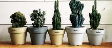 まるで植物園みたい。表情豊かな植物が並ぶ「Naptime 小林植物店」