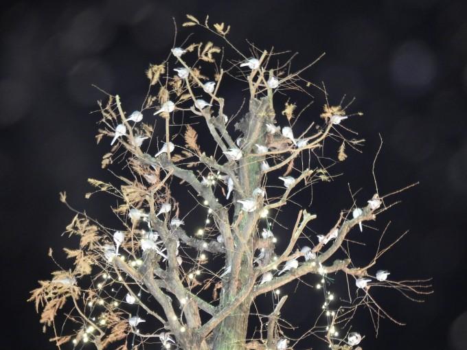 街灯近くの街路樹を寝床にするハクセキレイ