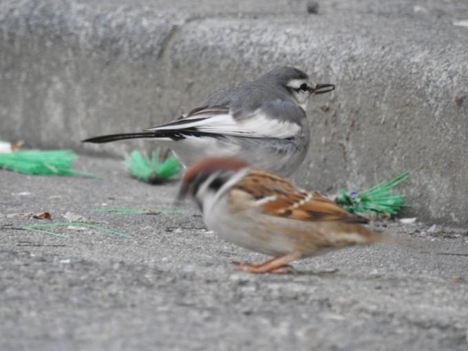 スズメなど2羽の鳥