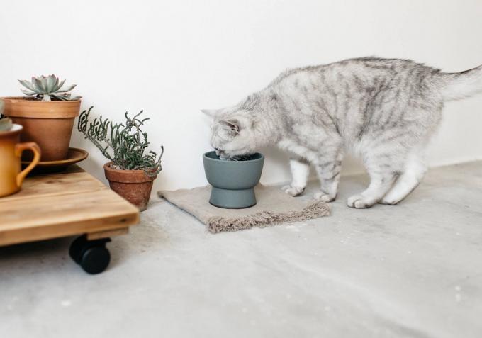 "RINNの猫用水飲み器""IZUMI""で水を飲む猫"