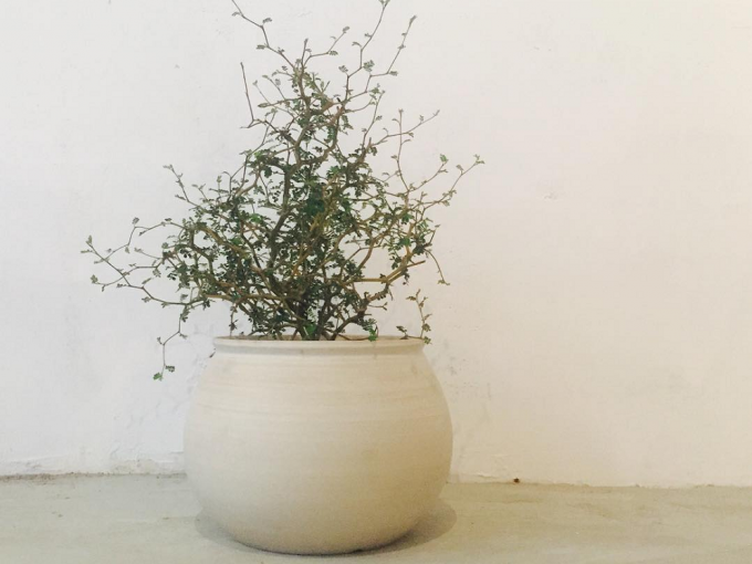 3RD CERAMICSの鉢に入った植物