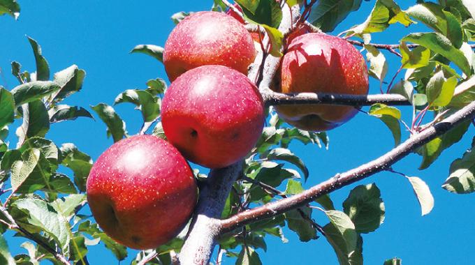 りんご、梨、桃を主に栽培する果樹園「大野農園」