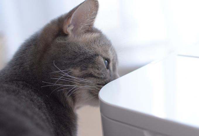 """RINNの自動給餌器""""PELTY""""に口をつける猫"""
