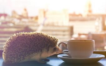 世界初のハリネズミ専門カフェ「HARRY」で過ごす安らぎのひととき