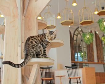 猫好き必見。会社帰りにも気軽に立ち寄れる、おしゃれなインテリアの猫カフェ「MoCHA(モカ)」