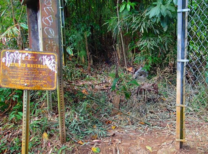 ハワイおすすめのハイキングスポット入口