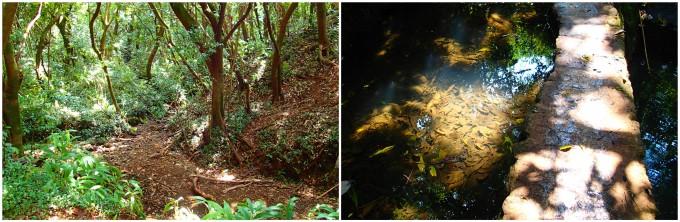 ハワイの大自然に触れて癒されて!ローカルおすすめの『Lulumahu Falls Trail』