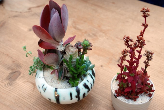 多肉植物ユニットTOKIIROによる赤い多肉植物の鉢植え
