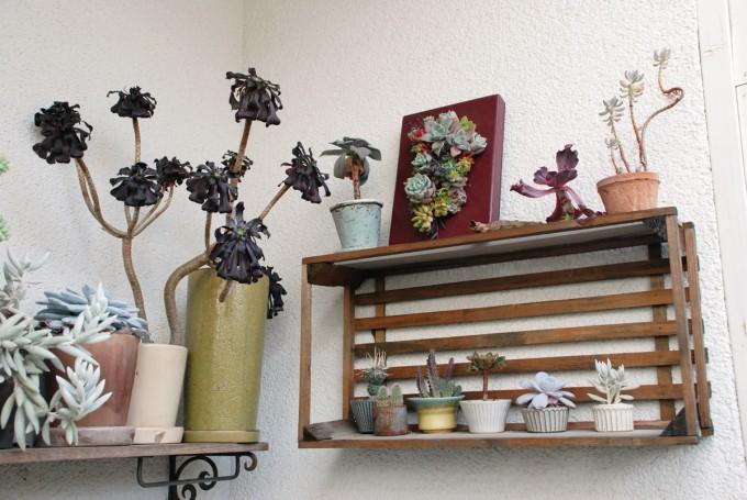 多肉植物ユニットTOKIIROのアトリエに飾っている多肉の鉢植えやアレンジメント