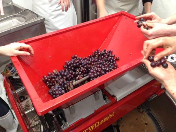 葡萄を潰す機会に入れているところ
