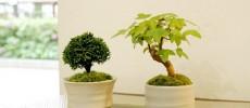 自宅に飾れる日本の四季「Green Scape」の盆栽で空間をデザインしよう
