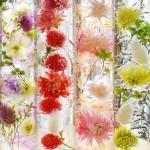 飾る場所を選ばずにお花を楽しめる、「ハルコレ」のハーバリウム