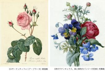 """""""花のラファエロ""""と呼ばれた宮廷画家のボタニカルアートを間近で。ルドゥーテの「バラ図譜」展"""